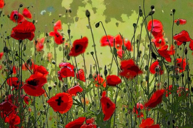 Poppies by Gillian Robertson