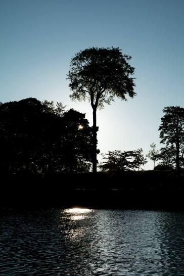 Kevin Dawson:Silhouette